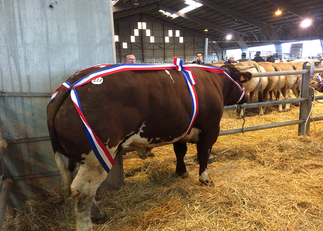 vache-medaille