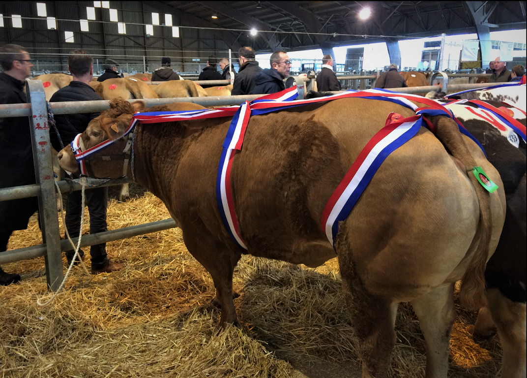 medaille-vache